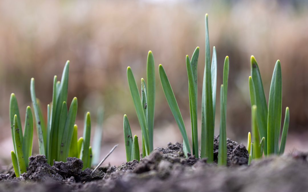 Spring brings… new beginnings and fresh starts